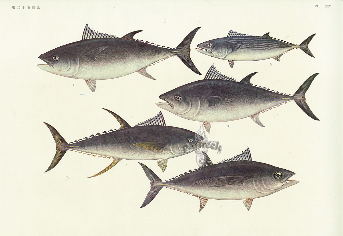 Fish Of The Pacific 1931