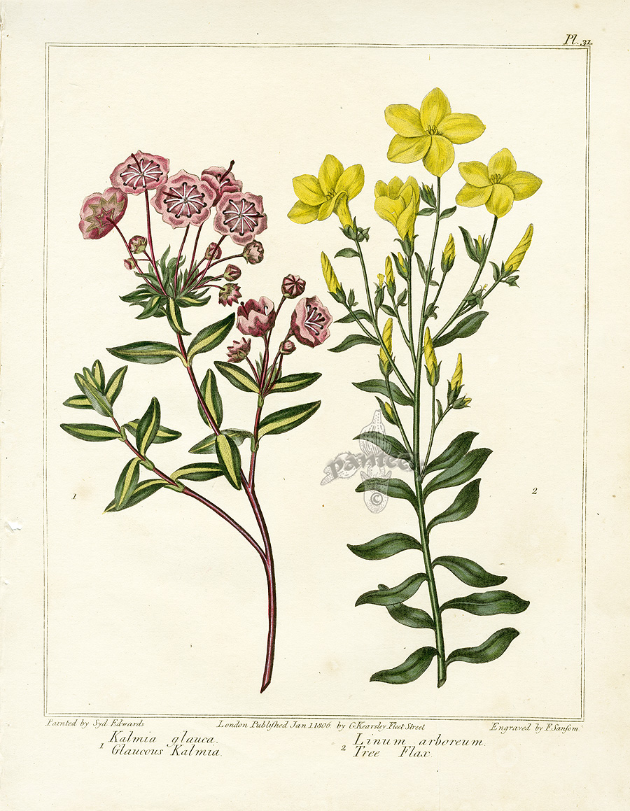 Edwards Botanical Prints from Dickson 39 s