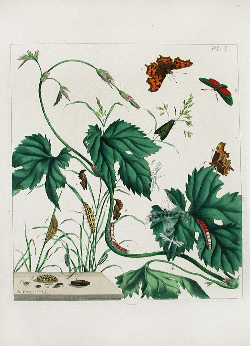 moses harris butterfly prints 1840