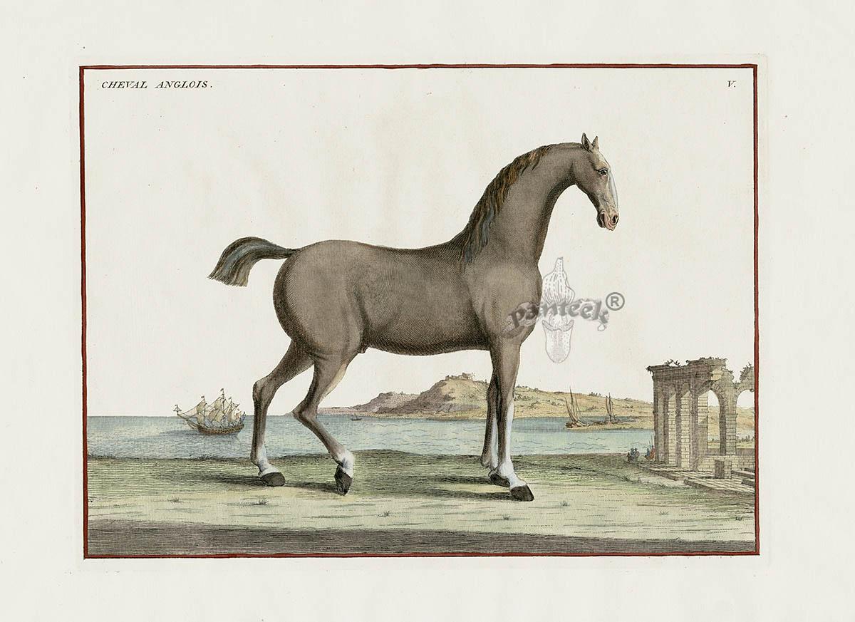 Anglois eisenberg horse prints 1727