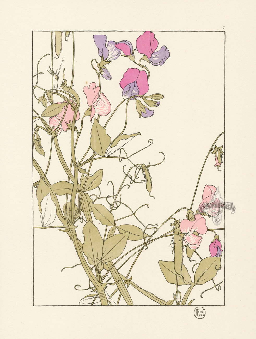 Foord Pochoir Flower Studies 1901