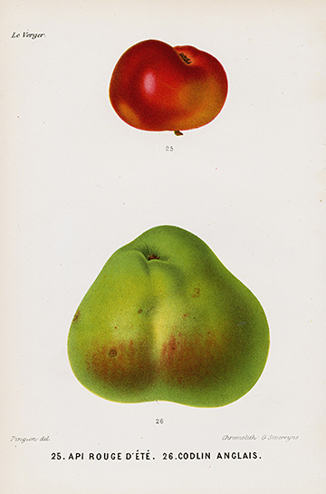 Top M. Mas Le Verger or The Orchard Fruit Prints 1866 JX45