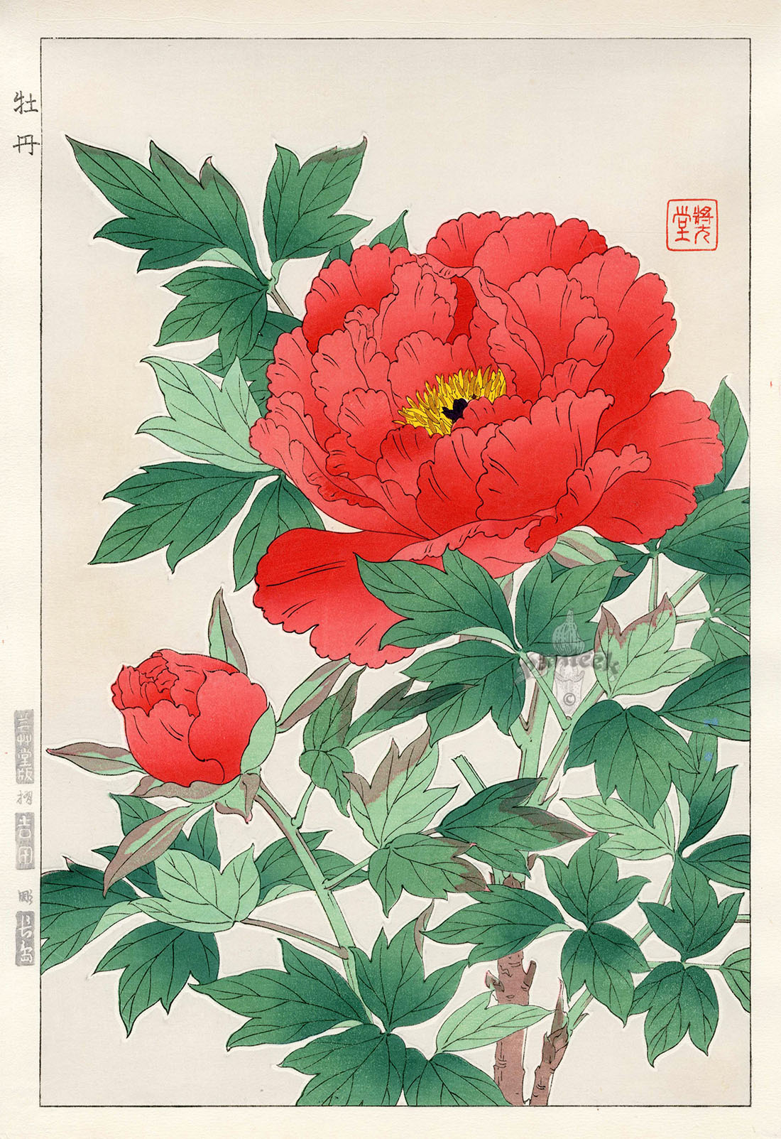 Poppy From Shodo Kawarazaki Spring Flower Japanese Woodblock Prints