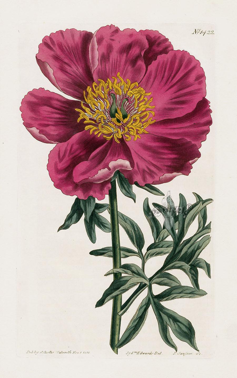 William Curtis Botanical Magazine