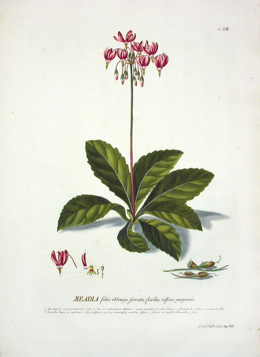 Trew Antique Botanical Prints 1750