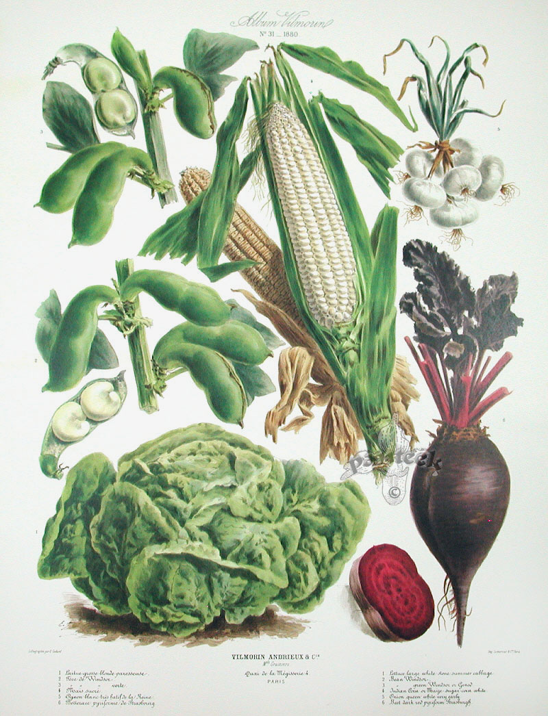 Vilmorin Fruit Vegetable Prints