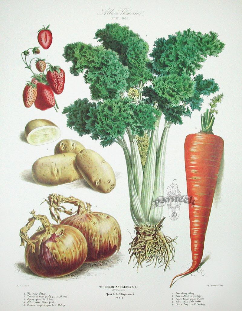 vilmorin fruit u0026 vegetable prints
